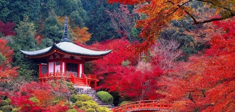Hanami, celebrare la magia del Giappone